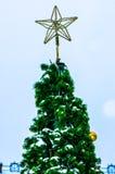 Den lilla gran-träd förkylningen i vintern Fotografering för Bildbyråer