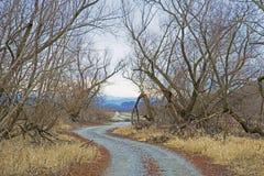 Den lilla grusvägen som inramas med buskar, leder till oändligheten royaltyfri foto