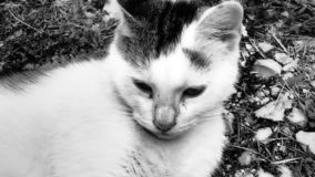 Den lilla gulliga katten vilar royaltyfri bild