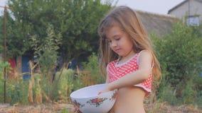 Den lilla härliga flickan samlar tomater i trädgården stock video