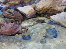 Den lilla havssidan vaggar tips Fotografering för Bildbyråer
