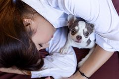 Den lilla hunden skyddar hennes ägare medan nätt asiatiskt sova för kvinna royaltyfria foton