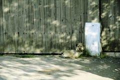 Den lilla hunden väntar på ägare royaltyfri foto