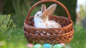 Den lilla kaninen sitter i en korg bredvid målade påskägg arkivfilmer