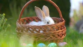Den lilla kaninen sitter i en korg bredvid målade påskägg
