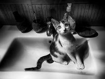 Den lilla katten tog ett ställe i vasken Royaltyfri Foto