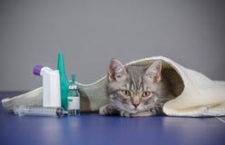 Den lilla kattungen är sjuk, behandlingkattungen Arkivfoto
