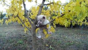 Den lilla kattungen faller från träd på äng i natur