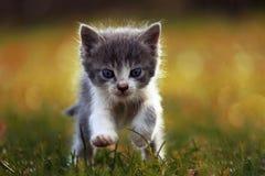 Den lilla kattungen kör på gräset Arkivfoto