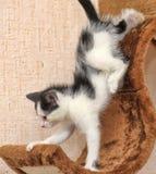 Den lilla kattungen klättrar lekstugor Arkivbilder