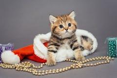 Den lilla kattungen sitter i en jultomtenhatt Royaltyfria Bilder
