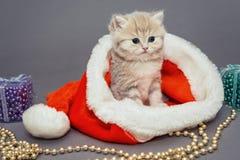 Den lilla kattungen sitter i en jultomtenhatt Royaltyfria Foton
