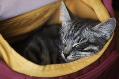 Den lilla kattungen sover i en påse Fotografering för Bildbyråer