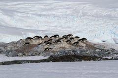 Den lilla kolonin av Adelie pingvin bland vaggar och snö på Arkivbilder