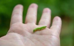 Den lilla larven på en mans handwitrh blir grund djup arkivbild
