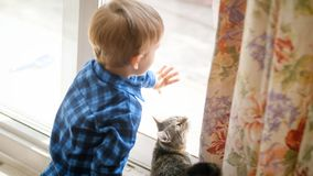 Den lilla litet barnpojken öppnar dorr på gatan till den inhemska katten royaltyfri foto