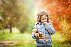 Den lilla lockiga flickan som spelar med guld- sidor i höst, parkerar Arkivbild