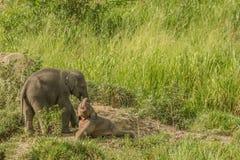 Den lilla lyckliga elefanten behandla som ett barn Royaltyfri Fotografi
