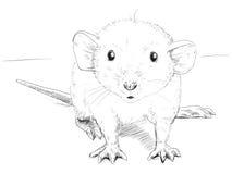 Den lilla musen skissar Arkivbilder