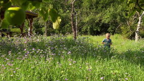 Den lilla pojken för blont hår går vid vandringsledet för sommaräppleträdgården och samlar växterna lager videofilmer