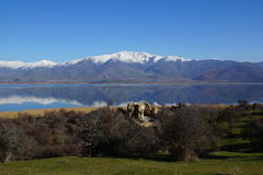 Den lilla Prespa sjön, den Agios Achillios ön, fördärvar av St Achillius, Grekland Arkivbilder