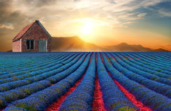 Den lilla röda ladugården på lavendelkulle 2 Arkivbild