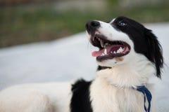 Den lilla söta lilla hunden söker efter dig fotografering för bildbyråer
