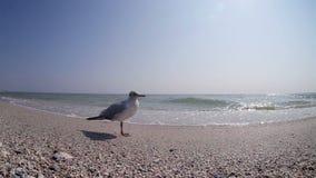 Den lilla seagullen står på stranden, medan havsvågor kör upp kusten arkivfilmer
