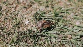 Den lilla snigeln sitter på på en grupp av grönt gräs royaltyfria bilder