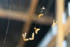 Den lilla spindeln kl?ttrar spindelns reng?ringsduk arkivfoton