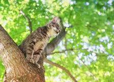 Den lilla stiliga gulliga strimmig kattkattungen sitter högt på ett träd med ljus frodig lövverk i en solig sommarträdgård fotografering för bildbyråer