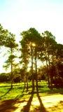 Den lilla strålen av ljus som frågar tillåtelse mellan sidorna av trädet royaltyfri foto