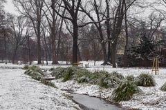 Den lilla strömmen och snö-täckte tofsar av gräs, gräsmatta och träd i stad parkerar i dimmig morgon royaltyfria foton