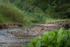Den lilla strömströmmen i den lilla floden för den lösa gröna foresttranquilrengöringen i skog med vaggar och den gröna växten fr Royaltyfria Foton