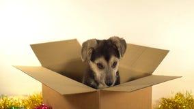 Den lilla valphunden sitter i brevskickandeask med garneringar för jul och för det nya året Arkivfoton