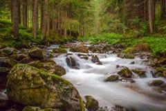 Den lilla vattenfallet i en skogflod med silkeslent vatten runt om vaggar i strömmen exponering long Royaltyfria Bilder