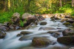 Den lilla vattenfallet i en skogflod med silkeslent vatten runt om vaggar i strömmen exponering long Arkivbild