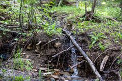 Den lilla vattenfallet skapar en liten vik till och med frodigt gräs i Rocky Mountain National Park arkivfoto