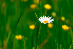 Den lilla vita blomman 5 Arkivbild