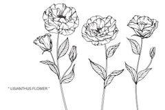 Den Lisianthus blommateckningen och skissar Royaltyfri Fotografi