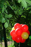 Den ljusa bilden av en grupp av röda ballonger tände vid sommarsolen på bakgrunden av hängande över träd för grön lövverk, upplys Royaltyfri Bild