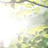 Den ljusa eteriska våren lämnar bakgrund Fotografering för Bildbyråer