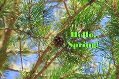 Den ljusa färgrika bilden av en vår sörjer trädet med gröna visare, och bryna den öppna kotten med inskriften Hello, vår Fotografering för Bildbyråer