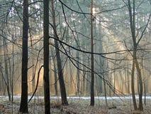 Den ljusa morgonen färgar på våren skogdimma marsch arkivbild