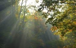 den ljusa morgonen rays sunen Royaltyfri Fotografi