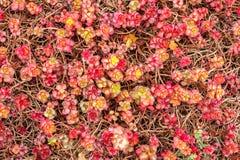 Den ljusa och färgrika naturhöstbakgrunden arkivfoton