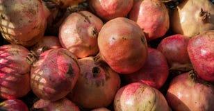 Den ljusa röda granatäpplet bär frukt i asken på solen Arkivfoton