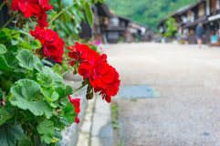 Den ljusa röda pelargon blommar med den japanska byn på backgroen Royaltyfri Foto