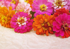 Den ljusa rosa färgen, röd orange sommar blommar på papper Royaltyfri Bild