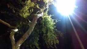 Den ljusa stolpen Arkivfoton